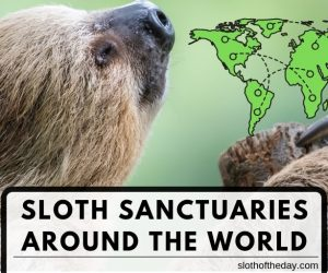 8 Awesome Sloth Sanctuary Around the World
