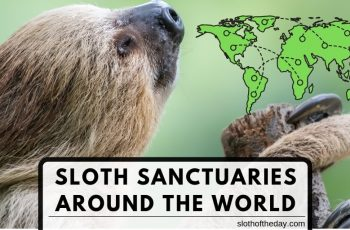 8 Awesome Sloth Sanctuary Around the World - 8 Cool Sloth Sanctuaries Around the World