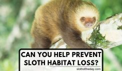 Can You Help Prevent Sloth Habitat Loss