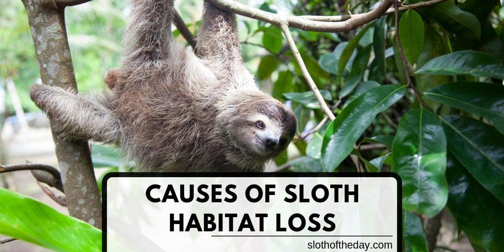 Causes of Sloth Habitat Loss