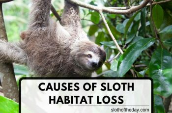 Causes of Sloth Habitat Loss