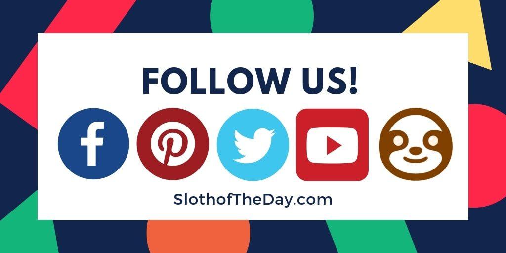 FOLLOW Sloth of The Day - Follow Slothoftheday