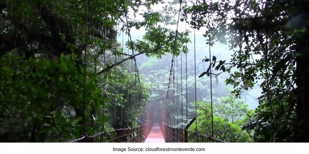Rope Bridge Costa Rica Rain Forest Sloth Reserve