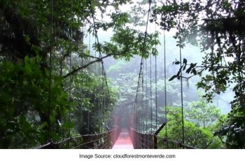 Rope Bridge Costa Rica Rain Forest Sloth Reserve