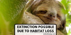 Sloth Habitat Loss Could Cause Sloth Extinction Loss