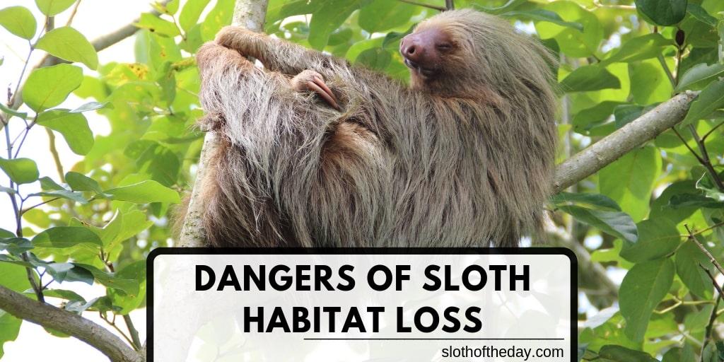 The Dangers of Sloth Habitat Loss