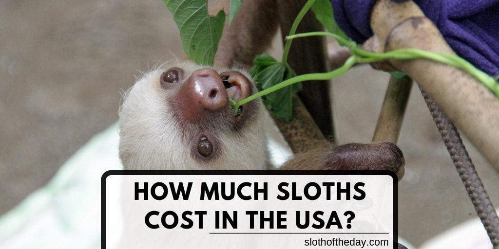 How Much Do Sloths Cost in the USA