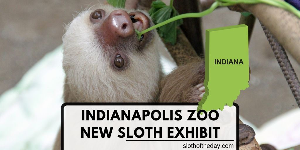 New Sloth Exhibit Opens May 25th in Indianapolis Zoo