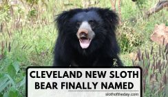 Cleveland New Sloth Baby Bear Finally Named Twitter