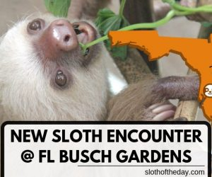 New Sloth Encounter at Florida Busch Gardens