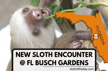 New Sloth Encounter Florida Busch Gardens