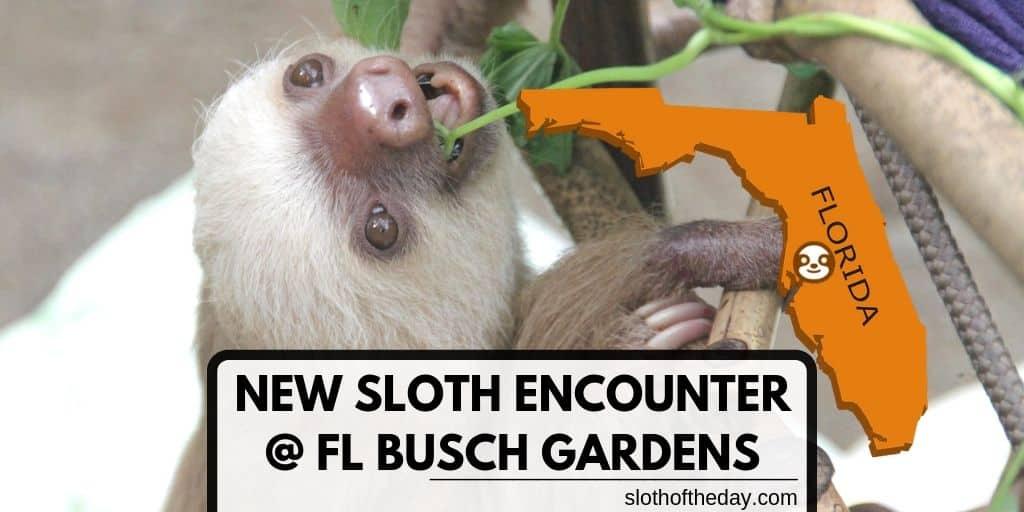 New Sloth Encounter Florida Busch Gardens