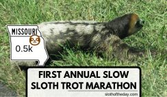 The First Annual Slow Sloth Trot 0 5K Marathon