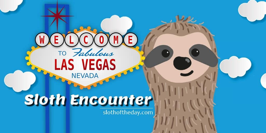 Last Vegas Sloth Encounter - See a Sloth in Las Vegas