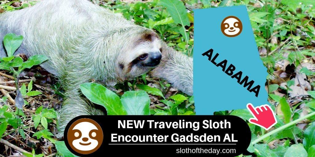 NEW Traveling Sloth Encounter Gadsden Mall Alabama State