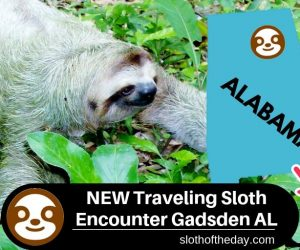Traveling Sloth Encounter at Gadsden Alabama