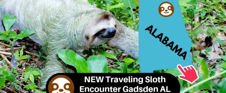 NEW Traveling Sloth Encounter Gadsden Mall Alabama State