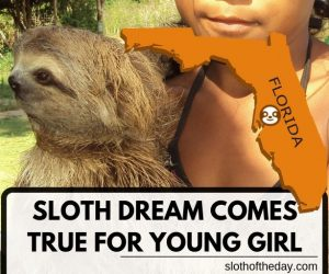 Sloth Dream Wish Come True for A Sick Young Girl