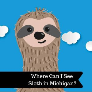 Where Can I See Sloth in Michigan