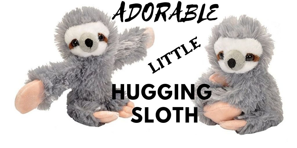 Adorable Little Hugging Sloth
