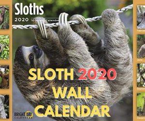 2020 Sloth Wall Calendar 16 Month 12 x 12 Wall Calendar