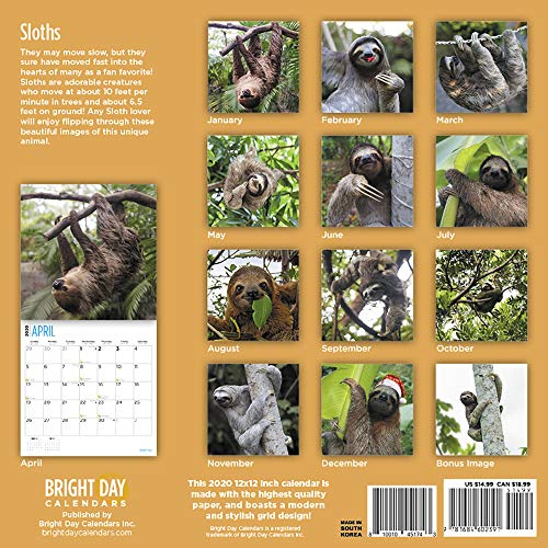 Many Sloth Images 2020 Sloth Wall Calendar 16 Month 12 x 12 Wall Calendar Feature