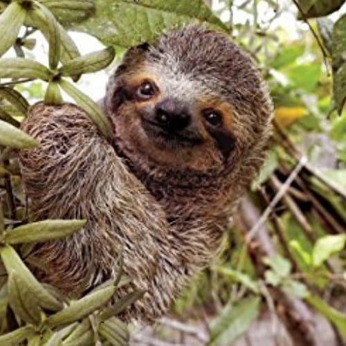 Cute Life In The Slow Lane Sloth Book by Lucy Cooke