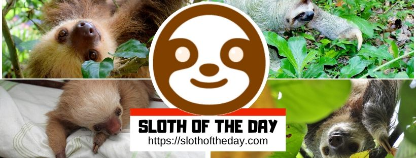 About Sloth of The Day