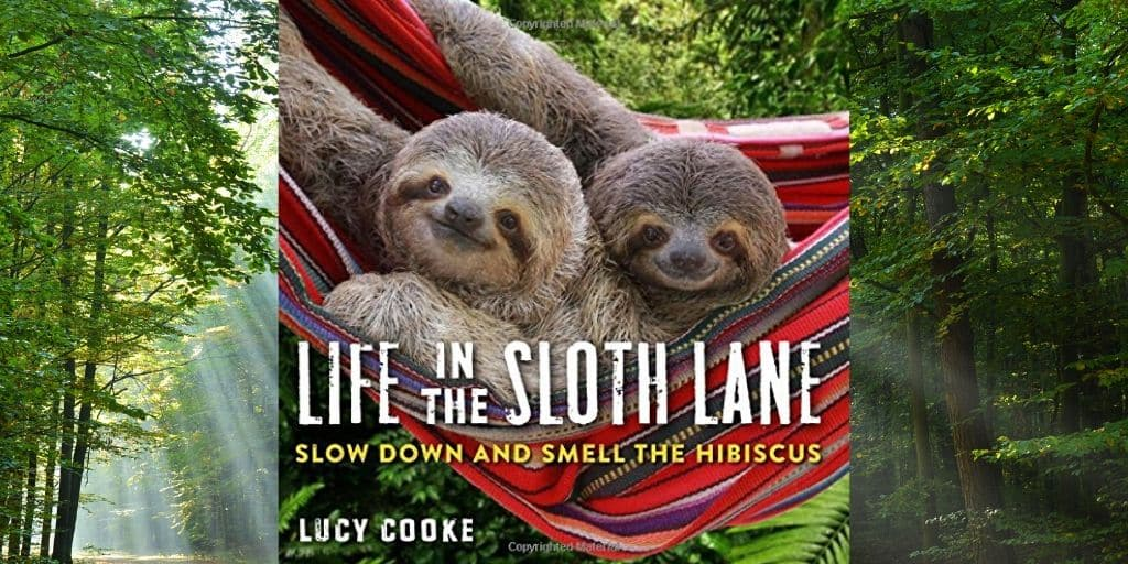 Sweet Life In The Slow Lane Sloth Book by Lucy Cooke