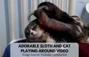 Adorable Sloth And Kitty Love Two Minute Sloth Video