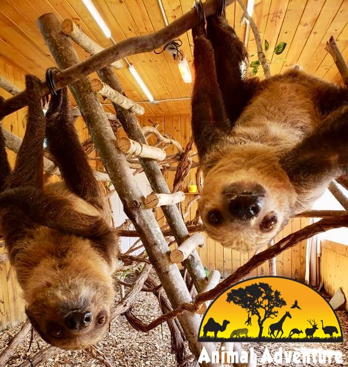 Animal Adventure Park Sloth encounter Experience Images
