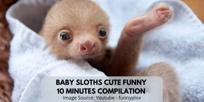 Baby Sloths Cute Funny Videos Compilation 10 Min of Sloths