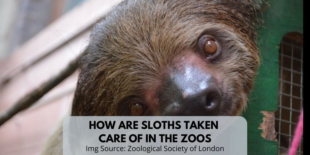 How To Care For A Sloth Video Two Minute Video For Everyone