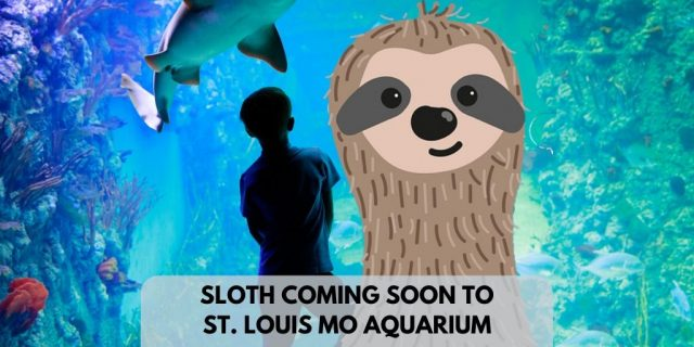 New St Louis Missouri Aquarium Will Have Sloths Soon
