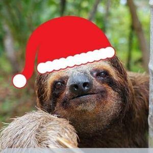 Santa Sloth Plays Santa on Christmas Eve