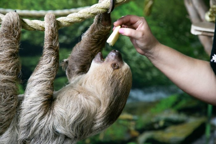 Tanganyika Wildlife Park Encounter Sloth Images