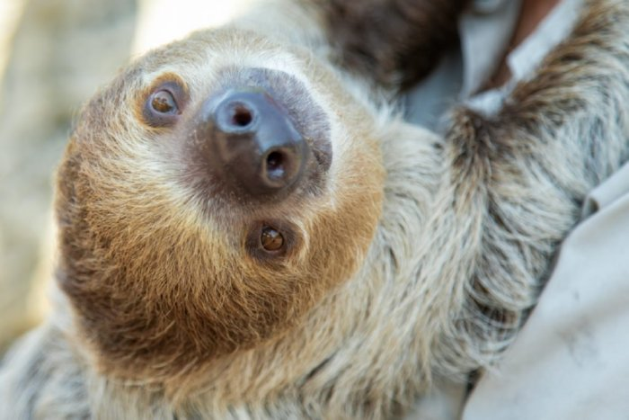 Tanganyika Wildlife Park Sloth Encounter Experience Images