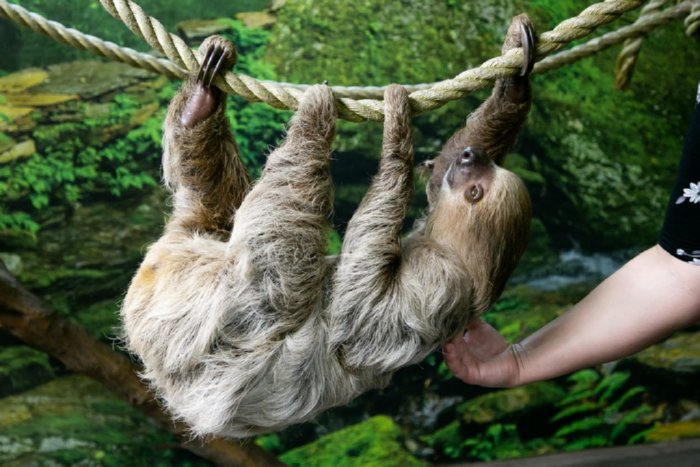 Tanganyika Wildlife Park Sloth Experience Encounter Images