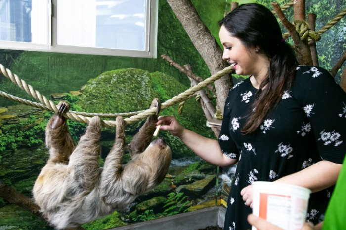 Tanganyika Wildlife Park Sloth Experience Images