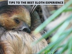 Tips to The Best Sloth Experience on Your Next Sloth Encounter