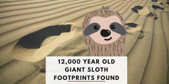 12000 Year Old Giant Sloth Footprints Found in New Mexico