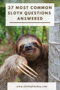 Here is a list of the Most Common Questions About Sloths we will be discussing below