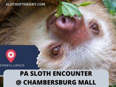 PA Sloth Encounter At The Chambersburg Mall Sloth Encounter Hosted By Chambersburg Pennsylvania Mall
