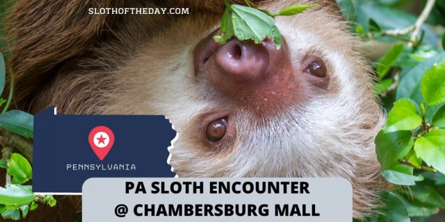PA Sloth Encounter At The Chambersburg Mall Sloth Encounter Hosted By Chambersburg Pennsylvania Mall