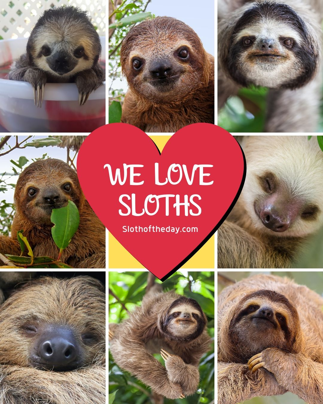 Sloth of The Day We Love Sloths Instagram Image