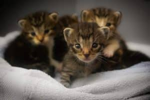 Who Cannot Touch Adorable Kittens