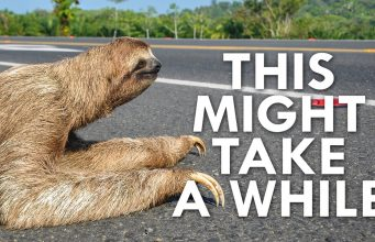 Why Are Sloths So Slow Video Lets Us Know Why