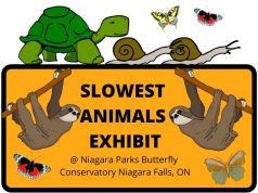 SLOWEST ANIMALS EXHIBIT