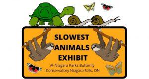 SLOWEST ANIMALS EXHIBIT