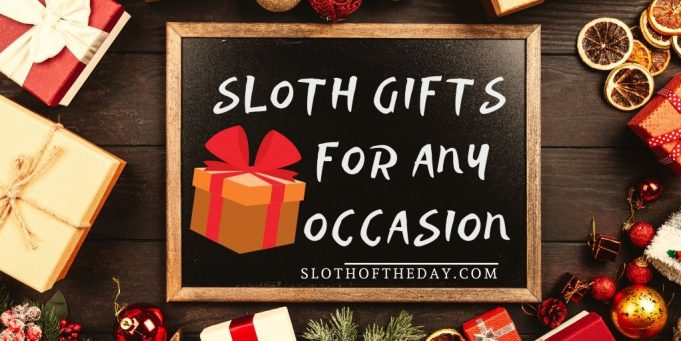 Sloth Gifts For Any Occasion Sloth Gift of The Day